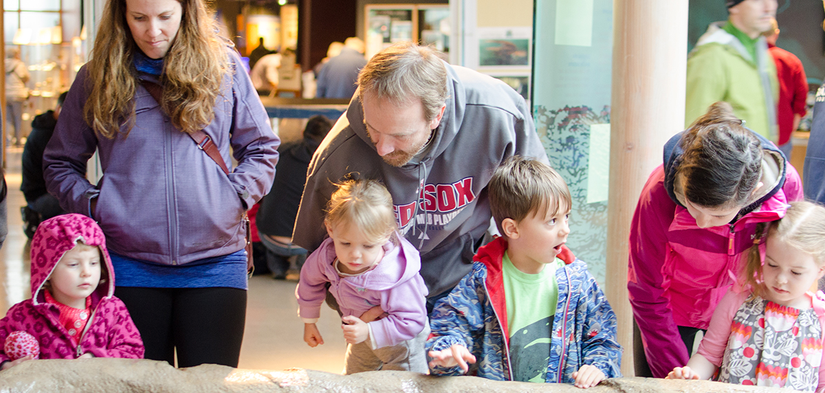 Family exploring the tide pool touch tank at the Hatfield Marine Science Center