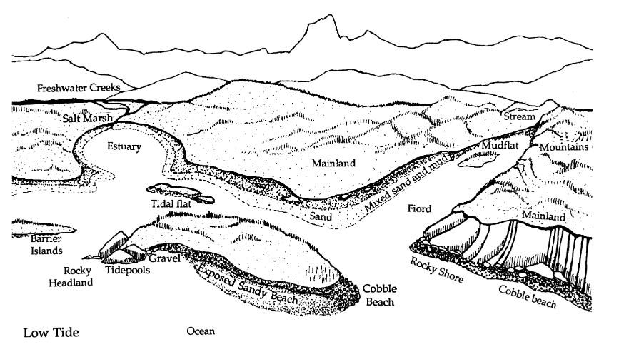 Diagram of coastline showing habitat at low tide in estuaries, rocky shores, rivers, etc.
