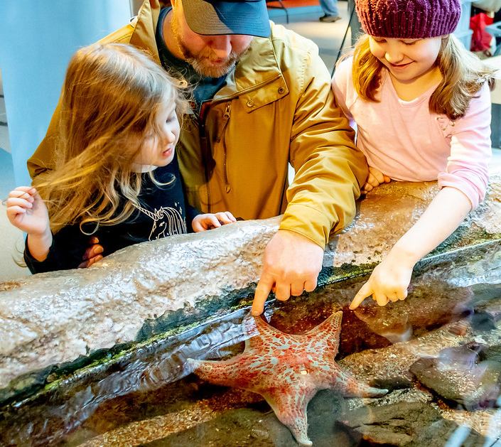A dad and his two young daughters gently touch a sea star in the tidepool exhibit at Hatfield Visitor Center in Newport, Oregon.