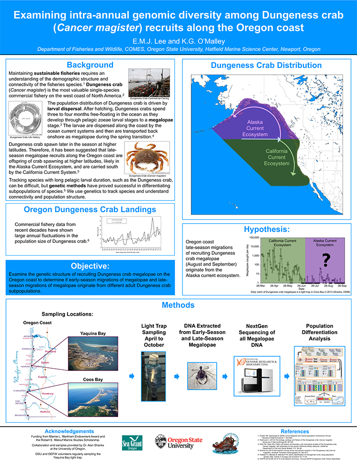 """Research poster titled, """"Examining intra-annual genomic diversity among Dungeness crab recruits along the Oregon coast"""""""