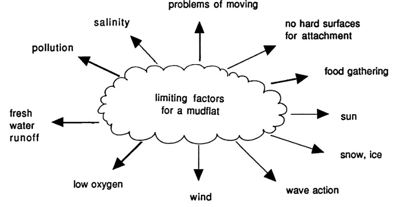 Diagram showing limiting factors for a mudflat. Shows clockwise, around a circular cloud; problems of moving, no hard surfaces, food gathering, sun, snow, ice, wave action, wind, low oxygen, fresh water runoff, pollution, salinity.
