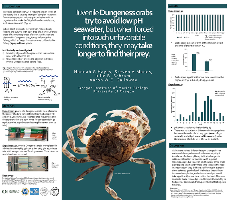 "Student research poster by Steven Manos titled, ""Juvenile Dungeness crabs try to avoid low pH seawater, but when forced into such unfavorable conditions, they may take longer to find their prey."""