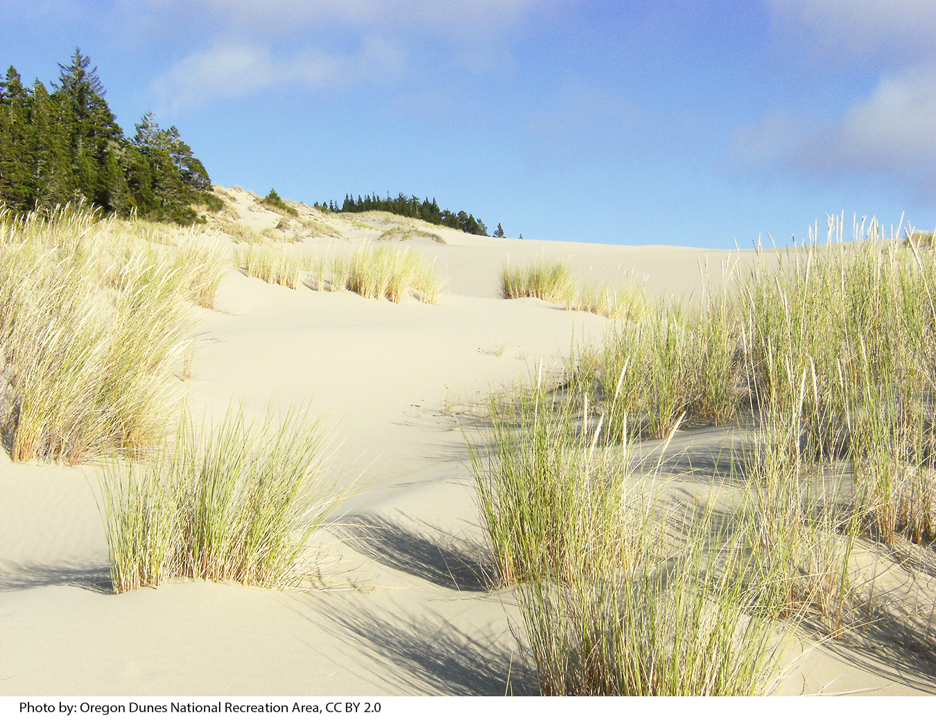 Oregon dunes with grasses in foreground