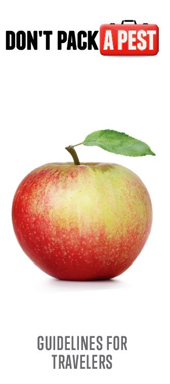 Cover of Don't Pack a Pest brochure with apple