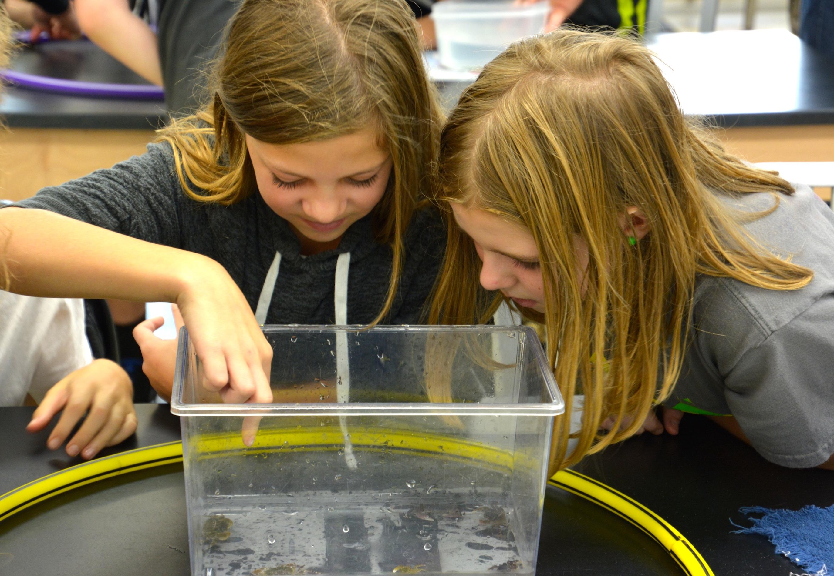 Students explore shore crabs.