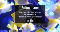 Animal Care at the Hatfield Marine Science Center's Visitor Center