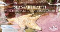 Sea Star Health: Using Blood Work to Identify Sick Sea Stars