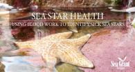Sea Star Health: Using Blood Work to Identify Sick Sea Stars