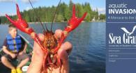Red swamp crayfrish