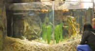 two people look at aquarium tank