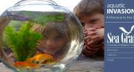 Invasive Goldfish