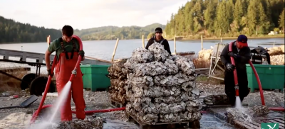 Clamming workers
