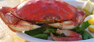 A cooked Dungeness crab on a bed of lettuce