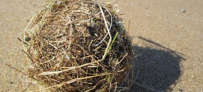 Beach ball made of vegetation
