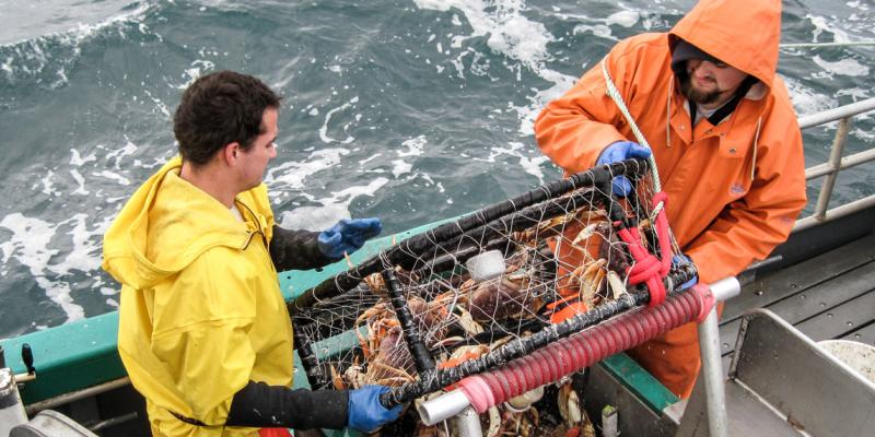 Crew members on the Delma Ann haul in a crab pot and hit it against a banger bar to force the crustaceans out of the pot. Because of a fisherman's suggestion, researchers are looking for ergonomic banger bars.