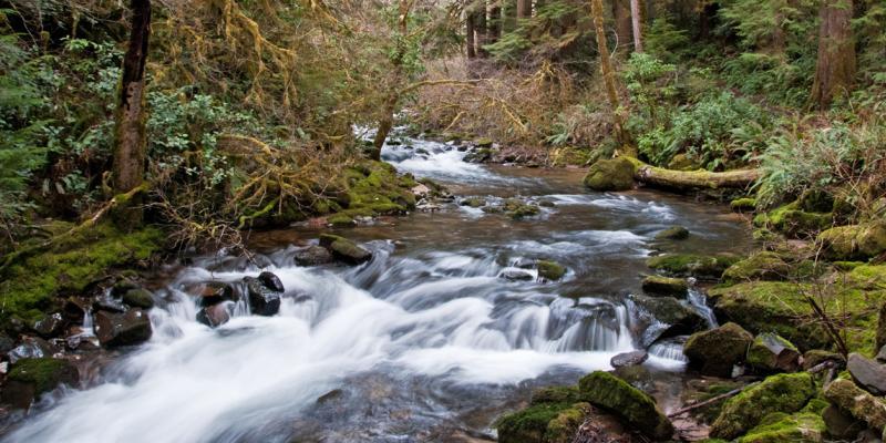 creek flows through forest