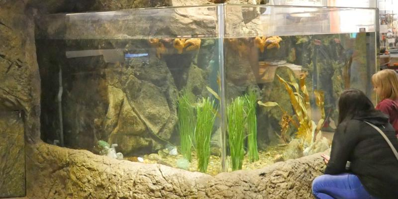 Aquarium tanks at HMSC