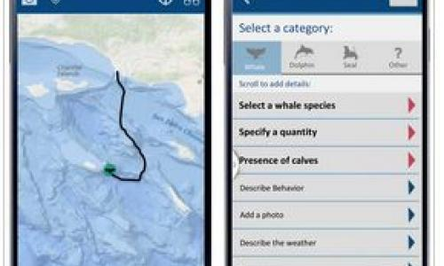 Image of app on a phone used to track marine mammal sitings by volunteers