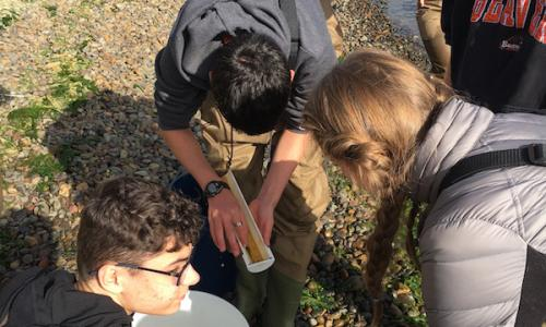 Career day participants measure fish captured in seine net.