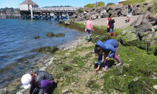 Campers explore Hatfield beach for shore crabs