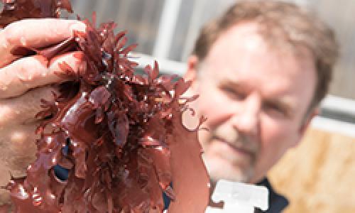 Chris Langdon holding red seaweed