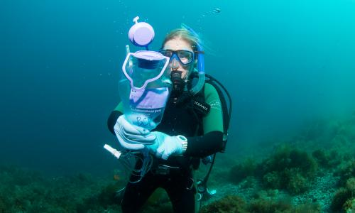 student researcher collecting samples underwater in scuba gear