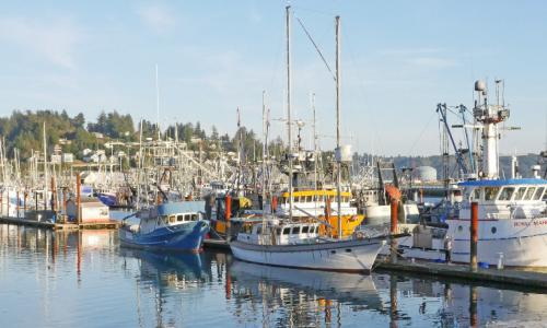 Colorful fishing boats docked in Newport, Oregon on a sunny day.