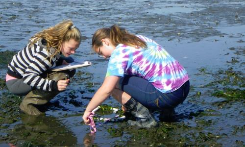 two girls look at seagrass in a mudflat