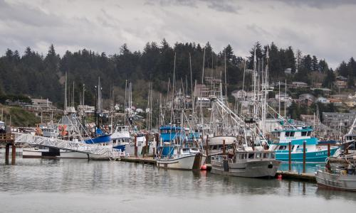Dozens of boats in Newport's commercial fishing port