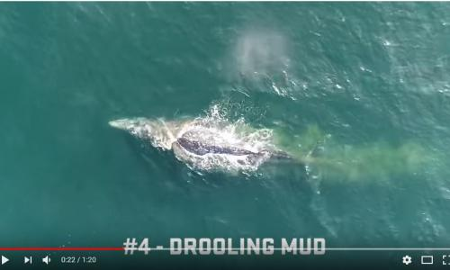 image from video from drone video footage of whales