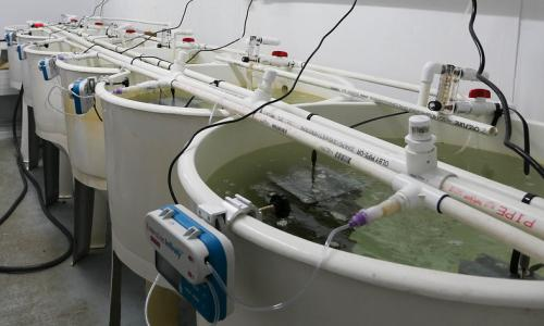 A series of large tanks with monitoring equipment used for aquaculture experiements