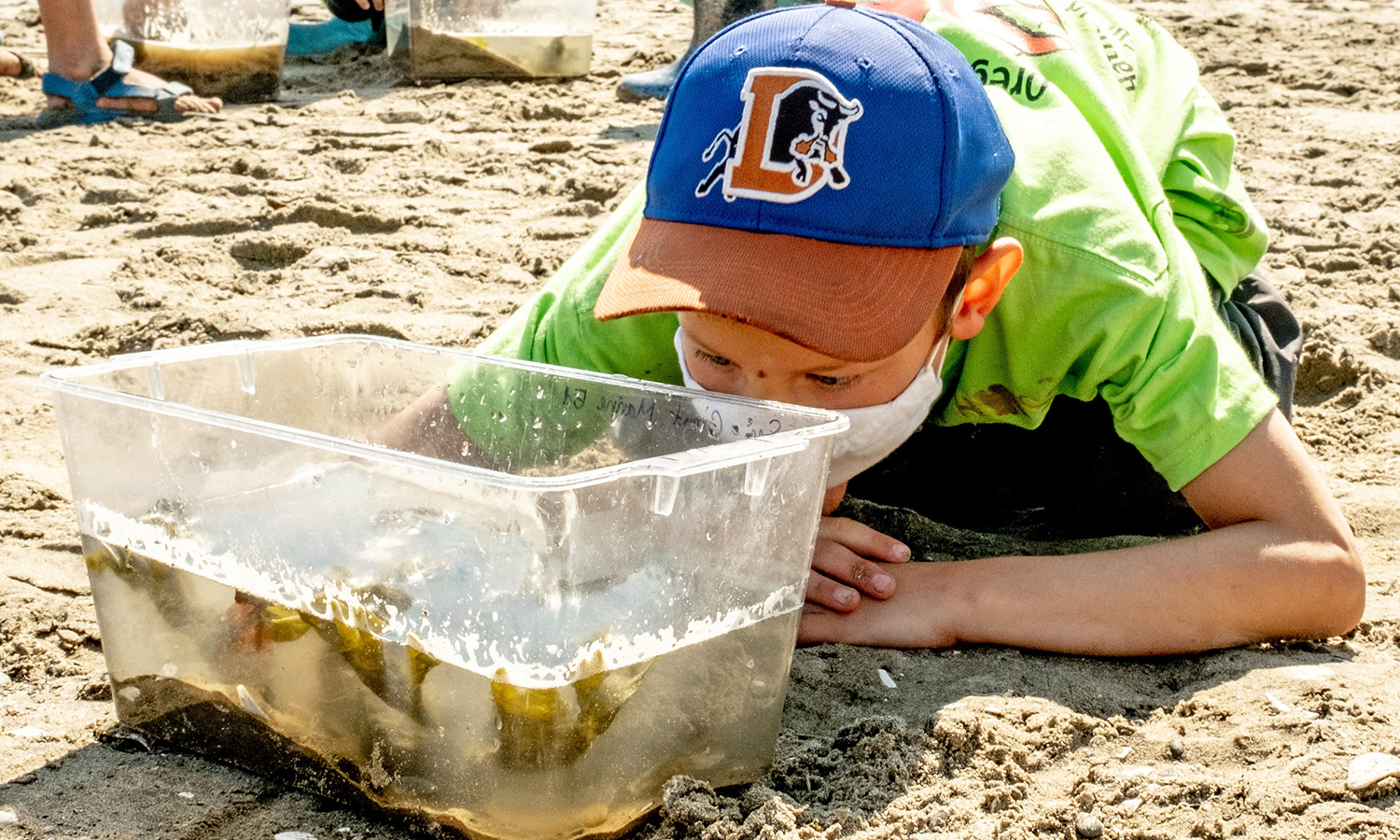 A child crouches on a beach to observe a small aquarium with collected crabs during a day camp.