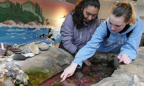 Two high school girls at Visitor Center tide pool touch tank