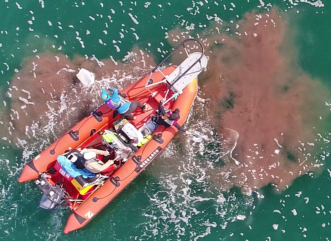 Aerial view of a small research boat. A plume of whale fecal matter floats in the water around the boat.